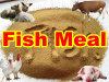 Het Vismeel van de ansjovis Voor Dier