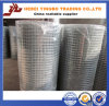 Galvanisiertes Welded Wire Mesh (YB-Welded mesh1)