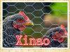 Rede de aves de galinha de galvanizado eletro galvanizado (XA-HM435)