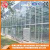Serra di vetro dell'acciaio inossidabile di agricoltura