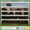 Le bétail lourd bon marché en gros lambrisse la cour de l'Australie
