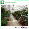 농업 야채를 위한 다중 경간 필름 녹색 집