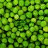 Vegetais congelados IQF novos das ervilhas verdes da colheita