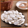 Buenas Semillas de calabaza Calidad Blancanieves en Venta