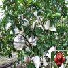 De Niet-geweven Stof van uitstekende kwaliteit van pp Spunbond voor Landbouw