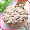 100%の自然で白い腎臓豆