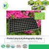 105 Zellen Balck PS Blumen-Potenziometer für Garten-Schwarzes HÜFTEN Startwert- für Zufallsgeneratortellersegment