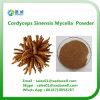 Cordyceps Sinensis alta calidad micelios en polvo
