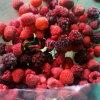 Alta calidad IQF Frozen Berry Mixta