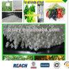 Solfato dell'ammonio del granello, SGS, fertilizzante solubile in acqua