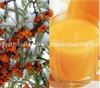 EUの品質、GMP 100%Natural有機性野生のSeabuckthornのフルーツジュース、Vcの王、Anti-Aging放射抵抗は抗癌性芝地生命を延長する