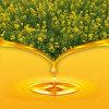 Aceite de rabina refinado No-Gmo caliente de la venta/aceite de Canola