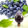Natural antioxidante de frutas Blue Berry polvo de extracto de 25% Antocianidinas 35% de antocianinas