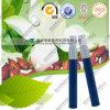 Gardenia-blaue Pudergardenia-Blau-Kosmetik