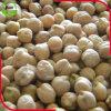 Grãos-de-bico de Kabuli com baixo preço