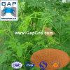 Poudre de feuille de moringa oleifera d'approvisionnement de constructeurs