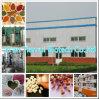 Extrato da fruta de Rangooncreeper/extrato chinês da madressilva