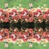 De digitale Stof van de Zijde van het Huis van Af:drukken Textiel (tld-0051)