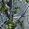 Camuflar novo da largura de Tsautop 0.5m/1m da chegada e película P1022 da impressão da película Hydrographic da película da impressão de transferência da água da árvore hidro