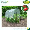 Serre chaude de couverture de tomate de jardin de ménage d'Onlylife BSCI mini