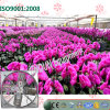 Flower Planting Greenhouse를 위한 중국 Hanging Type Exhaust Cooling Fan
