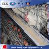 Автоматическая система Cgae слоя цыпленка для сбывания в Кении/Нигерии