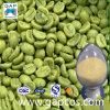 Acido clorogenico verde dell'estratto 10~ 50% del chicco di caffè