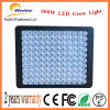 600W LED Grow Light für Indoor Mushroom Growth