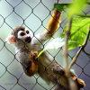 Cerca del mono del acoplamiento de Enclous del mono