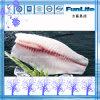 イズミダイの肉付けの深く皮を剥がれた肉付けによってフリーズされる魚のシーフード中国