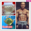 Het half afgewerkte Injecteerbare Steroid Testosteron Enanthate van de Olie 250 Mg/ml
