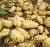 Kartoffelchip-frische Holland-Kartoffel