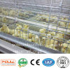 Il pulcino della pollastra mette in gabbia la strumentazione di pollicultura