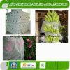 Tissus non-tissés de 100% pp pour l'agriculture
