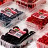 Plastic libero Tray Box per Fruit e Vegetable Packaging