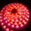 Водоустойчивый свет прокладки гибкого трубопровода СИД (HL-3528-100-120)