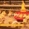 As aves domésticas da grelha acorrentam o fornecedor de alimentação do sistema da bandeja
