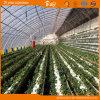 Chambre verte solaire pour la plantation végétale