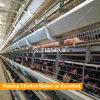 좋은 디자인 가금은 닭 새장을 층을 이룬다