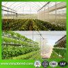 Virgin HDPE Anti Insect Net per Greenhouse