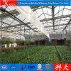 [فنلو] غطّى نوع زجاج زراعيّة دفيئة لأنّ بذرات ينمو
