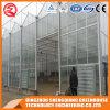 Multi-Überspannung rostfreier Stahl-Aluminiumprofil PC Blatt-Gewächshaus