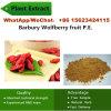 Pianta femminile della frutta P.E. della droga 50% 60% Chinabarbury Wolfberry della Cina