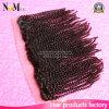 Frontal riccio crespo della chiusura del merletto dei capelli 13X4 del Virgin di Afro brasiliano