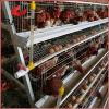 Южно - африканские гальванизированные клетки цыплятины слоя батареи цыпленка