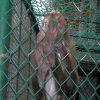 塀のZoolの塀の庭の塀のSportlandの動物の塀