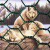 Rede sextavada revestida da exploração agrícola do PVC da rede animal