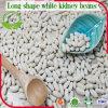 Chinesische mittlere Größen-weiße weiße Bohne 180-200