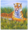 Pittura-Tigre animale (A016)
