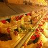 Camada Farm Equipment para Intensive Layer Farm (JCJX-204)